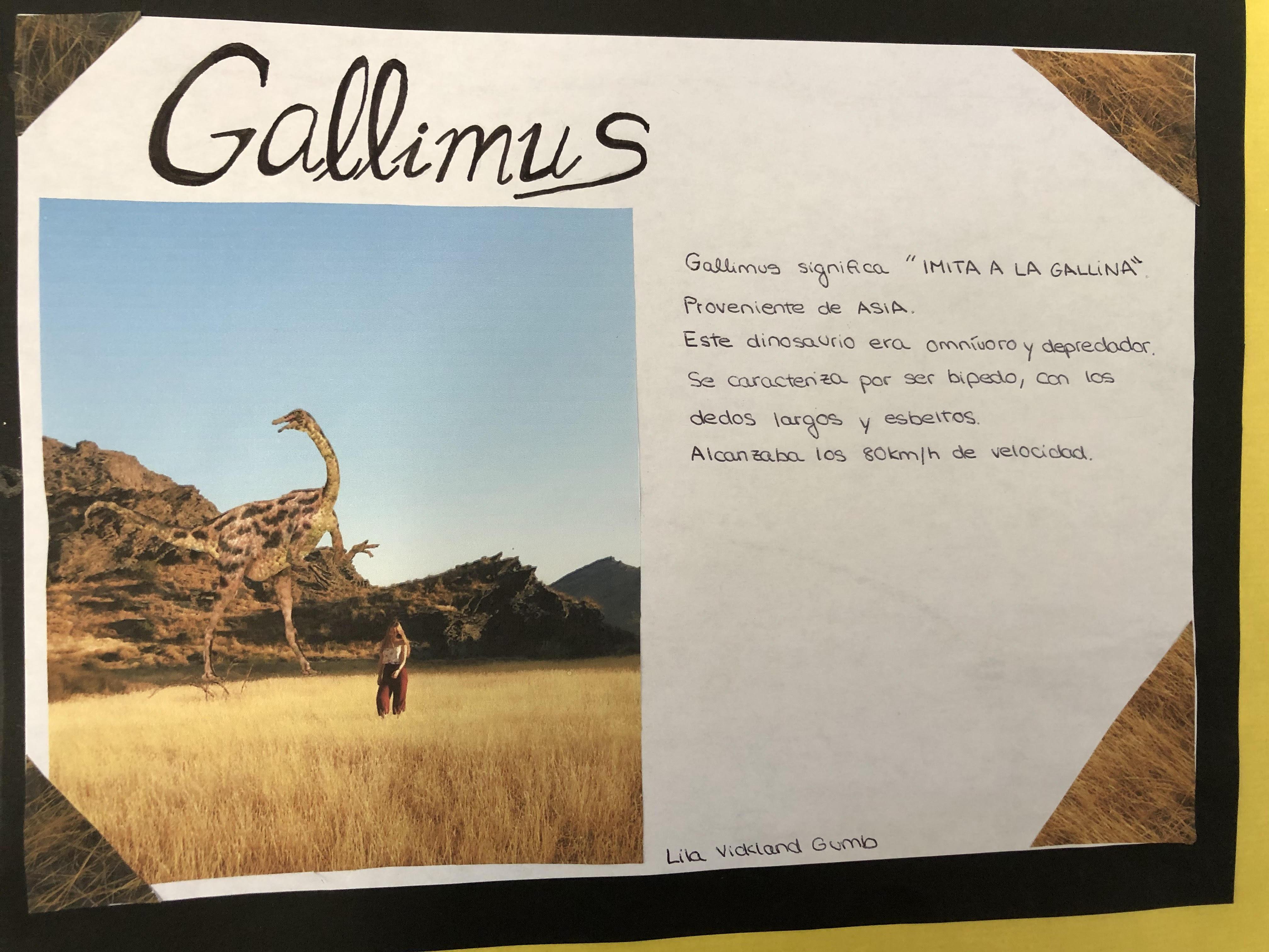 GALLIMUS.jpg